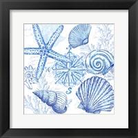 Framed Coastal Sketchbook Shell Toss