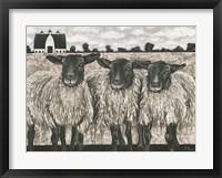 Framed Three Sheep