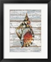Framed Seashell II