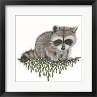 Framed Baby Raccoon