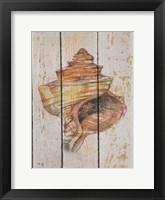 Framed Seashell IV