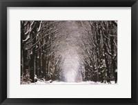 Framed Winter Tunnel