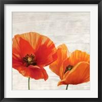 Framed Bright Poppies I