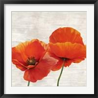 Framed Bright Poppies II