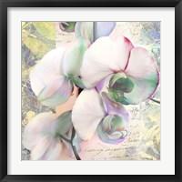 Framed Kaleidoscope Orchid (detail)
