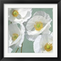 Framed Poppies on Mint I