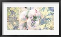 Framed Kaleidoscope Orchid