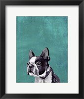 Framed Frenchie Puppy