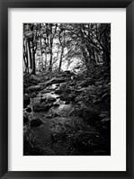 Framed Lush Creek in Forest BW