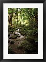 Framed Lush Creek in Forest