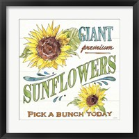 Framed Sunflower Fields IV