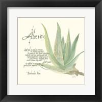 Framed Aloe Vera