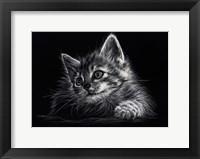 Framed Kitten