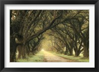 Framed Evergreen Alley