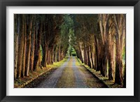 Framed Tree Tunnel