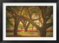 Framed Three Oaks and Azaleas