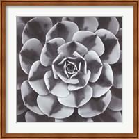 Framed Natural Designs III