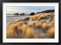 Framed Dune Grass And Beach