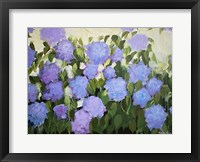 Framed Purple and Blue Hydrangeas