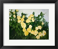 Framed Yellow Rose Bush