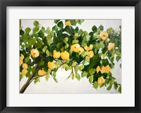 Framed Lemon Tree