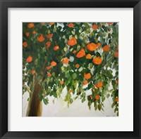 Framed Orange Tree