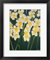 Framed Daffodils