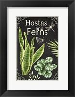 Framed Hostas and Ferns