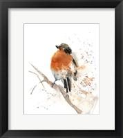 Framed Robin