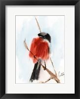 Framed Robin IV