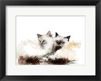 Framed Cat Cuddles