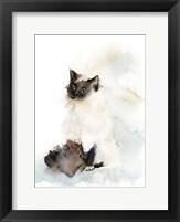 Framed Feline Fine