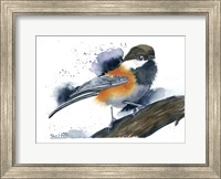 Framed Chickadee II
