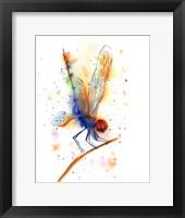 Framed Dragonfly II