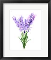 Framed Purple Flowers V