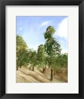 Framed Apple Trees