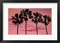 Framed Pink Palms