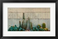 Framed Cactus Garden