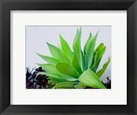 Framed Succulent I