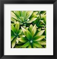 Framed Succulent V