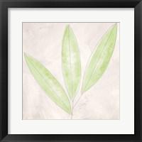 Framed Blush Bamboo