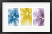 Framed Three X-Ray Flowers