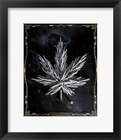 Framed Carpe Cannabis