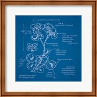 Framed Blueprints I