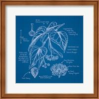 Framed Blueprints II