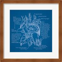 Framed Blueprints III