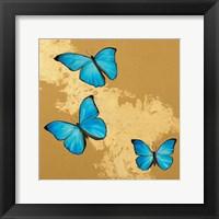 Framed Cerulean Butterfly II