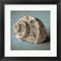 Framed Seashell Study I