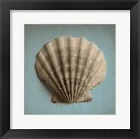 Framed Seashell Study II