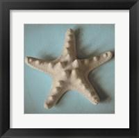 Framed Seashell Study III